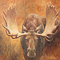 Bull Moose - Challenge by Crista Forest