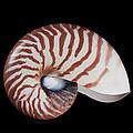 Chambered Nautilus by Ingo Arndt