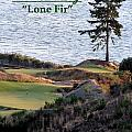 Chambers Bay's Lone Fir - Chambers Bay Golf Course by Chris Anderson
