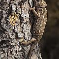 Chameleon Climbing by Pablo Romero