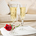 Champagne And Rose by Amanda Elwell