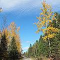 Changing Trail by Gene Cyr
