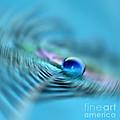 Chaotic Zen by Krissy Katsimbras