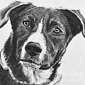 Charcoal Dog Shepherd by Kate Sumners