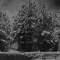 Charcoal Snowfall by Carolyn Stagger Cokley