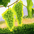 Chardonnay Grapes by Mike Robles