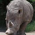Waco Texas Rhinoceros by JG Thompson
