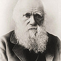 Charles Darwin by English School