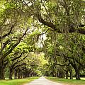Charleston Avenue Of Oaks by Stephanie McDowell