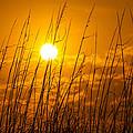 Charleston Beach Sunrise by Chris Austin