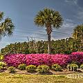 Charleston In The Spring by Dale Powell