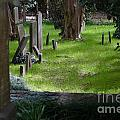 Charleston Sc Graveyard by Dale Powell