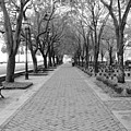Charleston Waterfront Park Walkway - Black And White by Carol Groenen
