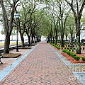 Charleston Waterfront Park Walkway by Carol Groenen