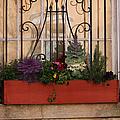Charleston Window Garden by Suzanne Gaff