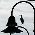Charming Silhouette by Teresa Schomig