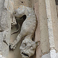 Chartres Cathedral Dog Gargoyle by Deborah Smolinske