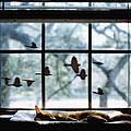 Chasing A Dream by Doug LaRue