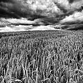 Chasing The Storm by John Farnan