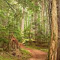 Cheakamus Lake Path by Adam Jewell