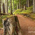 Cheakamus Lake Trail by Adam Jewell