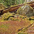 Cheakamus Rainforest Debris by Adam Jewell