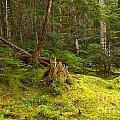 Cheakamus Rainforest Floor by Adam Jewell