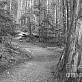 Cheakamus Trail In Black And White by Adam Jewell