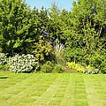 Checkerboard Lawn by Deborah Smolinske