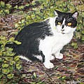 Checkers The Cat by Nancy Chenet