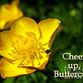Cheer Up Buttercup by Patti Whitten