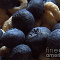 Cheerios And Blueberries by Steven Macanka
