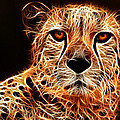 Cheetah Artwork by Don Johnson