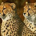 Cheetah Brothers by David Stribbling