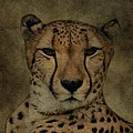 Cheetah Face by Dan Sproul