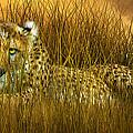 Cheetah - In The Wild Grass by Carol Cavalaris