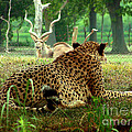 Cheetah Lunch-87 by Gary Gingrich Galleries