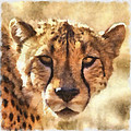 Cheetah One by Ingrid Smith-Johnsen