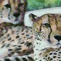 Cheetah Portrait by Dan Sproul