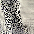 Cheetah by Suzette Kallen