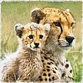 Cheetah Two by Ingrid Smith-Johnsen
