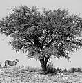 Cheetahs And A Tree by Max Waugh