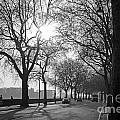 Chelsea Embankment London 2 Uk by Julia Gavin