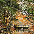Chenango Valley State Park by Christina Rollo