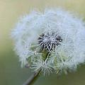 Cherish The Dew 2 by Fraida Gutovich