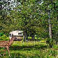 Cherokee Lake Thousand Trails Preserve by Bob and Nadine Johnston
