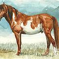 Cherokee Wild Stallion Of Sand Wash Basin by Linda L Martin