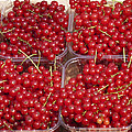 Currants by Phyllis Taylor