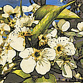 Cherry Blooms by Alice Gipson