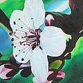 Cherry Blosom by Joshua Morton